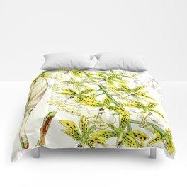 A orchid plant - Vintage illustration Comforters