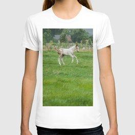 Playful colt T-shirt