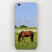 kentucky iPhone & iPod Skins featuring Kentucky by ThePhotoGuyDarren