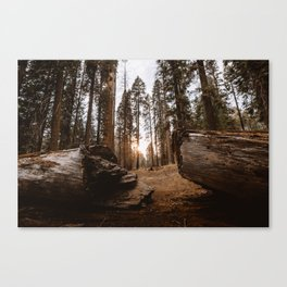 Light Between Fallen Sequoias Canvas Print