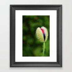 Poppy Bud Framed Art Print