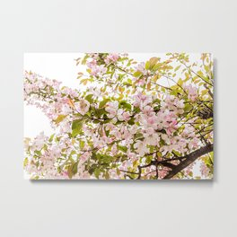 Blossoms Kissed by the Sun Metal Print