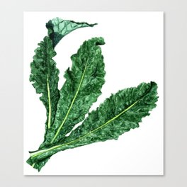 Lacinato Kale Canvas Print