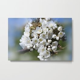 the beauty of a summerday -9- Metal Print