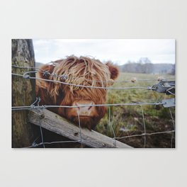 Baby Coo Canvas Print