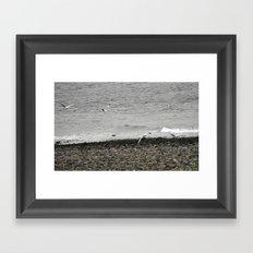 Flock of.. Framed Art Print