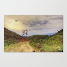Roadside tree Canvas Print