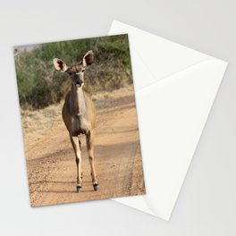 Kudu roadblock Stationery Cards