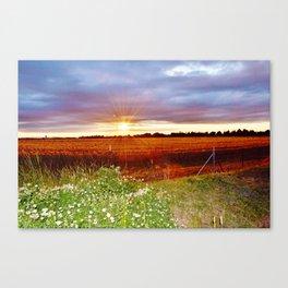 Sunshine field Canvas Print