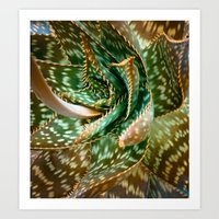 Aloe Saponaria, Soap Aloe Maculata Art Print