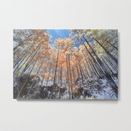 Looking up looking at the trees Metal Print