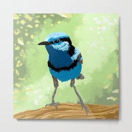 Bird - Superb Fairywren Metal Print