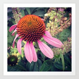Lovely Coneflower  Art Print