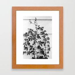 Supra Framed Art Print