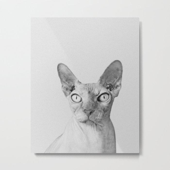 Shynx Cat Metal Print