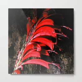Costa Rican Fiery Red Jungle Flower Metal Print
