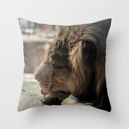 Big Cat Grooming Throw Pillow