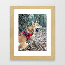 Shiba Inu yelling in the woods Framed Art Print