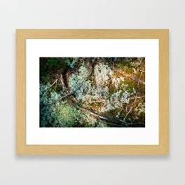 Forest Floor Framed Art Print