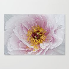 prime of life Canvas Print
