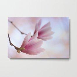 Magnolia flower macro 284 Metal Print