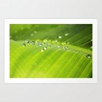 Drop of dew on palm leaves Art Print