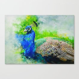 Painted Peacock Canvas Print