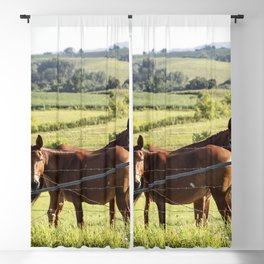 Mules gaze from opposite directions in rural Clayton County Iowa Blackout Curtain