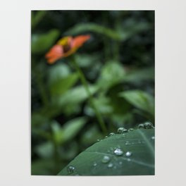 After the rain - Plants Photography Poster