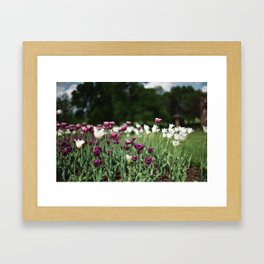 Film -- Tulips Framed Art Print