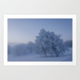 Black Forest Snowy Trees - Landscape Photography Art Print