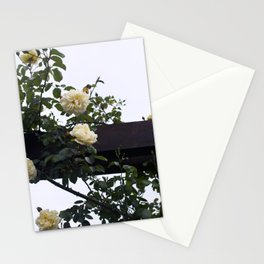 It's a Wrap Stationery Cards