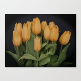 Peach Colored Tulips Canvas Print