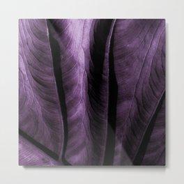 Purple Elephant Ear Leaf Metal Print