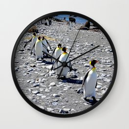 King Penguins returning to the colony Wall Clock