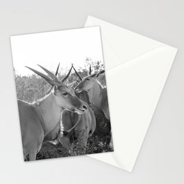 Herd of Eland stand in tall grass in African savanna Stationery Cards