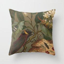 Antique Cicada Lithograph Throw Pillow