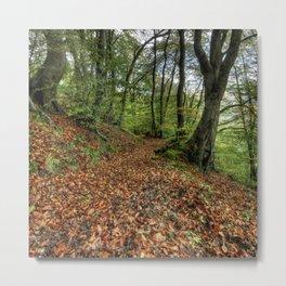 Autumn Woodland Walk Metal Print