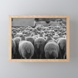 Sheep Framed Mini Art Print