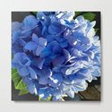Blue Hydrangia Flower Blossom by vermontgreetings