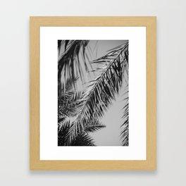 Fronds against the sky black and white Framed Art Print