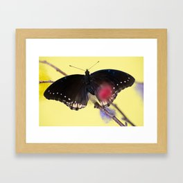 Tropical butterfly sitting on the colored bush over yellow background Framed Art Print