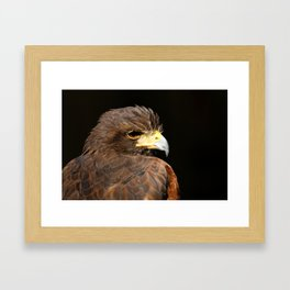 Harris Hawk | Bird | Bird of Prey | Raptor | Wildlife Photography | Nature | Hawk Framed Art Print