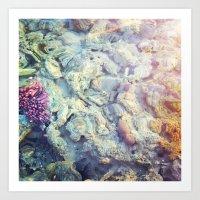 Corals/ Red Sea Art Print