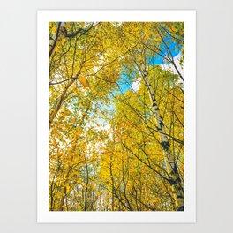 Autumn Landscape Birch Tre Art Print