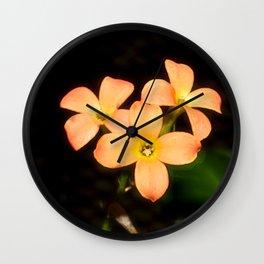 Kalanchoe Blossfeldiana 2 Wall Clock