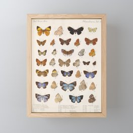 Vintage Scientific Insect Butterfly Moth Biological Hand Drawn Species Art Illustration Framed Mini Art Print