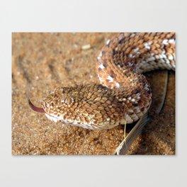 Sidewinder Snake Canvas Print