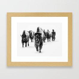 Bisons, black and white Framed Art Print