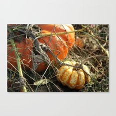 Around the Pumpkin Patch Canvas Print